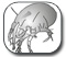 ������ ���� ���� ������ - Dust Mite Allergy