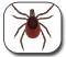 ��� ���� - Lyme Disease