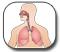�������� ������ - Cystic Fibrosis